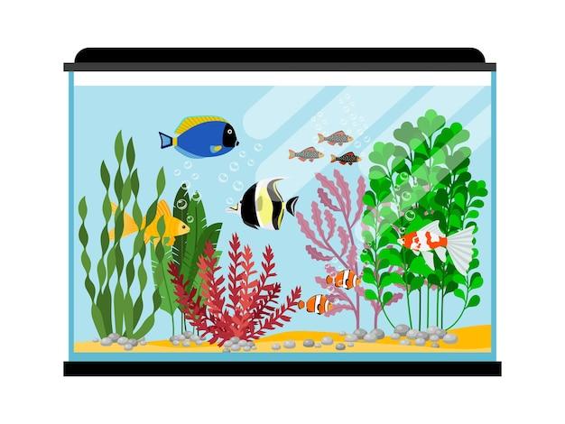 Dibujos animados de peces en acuario. ilustración de tanque de peces de agua salada o dulce. peces de colores de animales de agua, peces de mar de colores tropicales