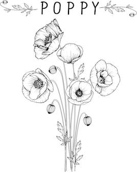 Dibujos de flores de amapola