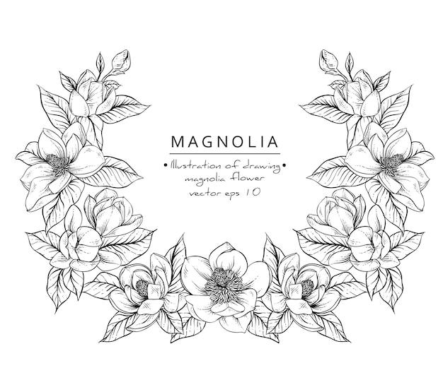 Dibujos de flores de magnolia.