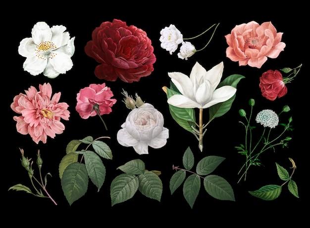 Dibujos de flores de la vendimia