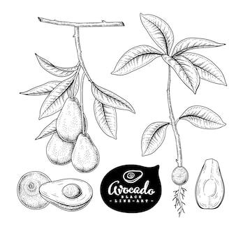 Dibujos de frutas de aguacate.