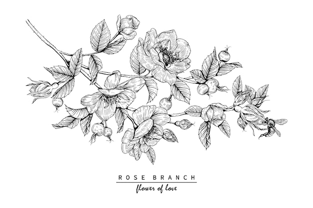Dibujos de rosas