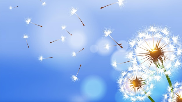 Diente de león realista. flor blanca esponjosa, semillas voladoras en el cielo azul
