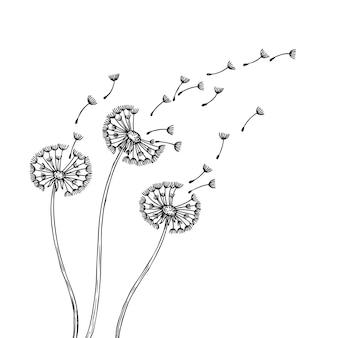 Dientes de león hierba polen delicadas semillas de plantas soplando viento