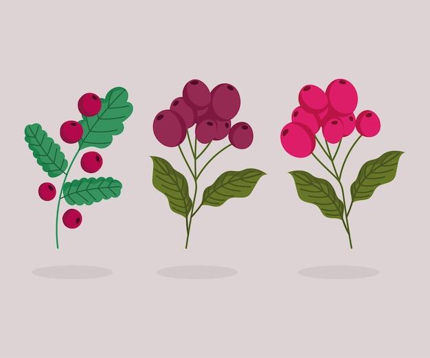 Diferentes árboles de banch con dibujos animados de semillas de café