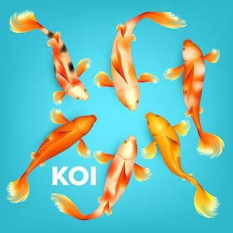 Diferentes colores de peces exóticos koi