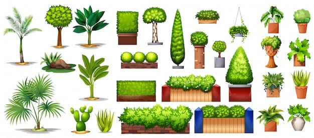 Diferentes especies de plantas