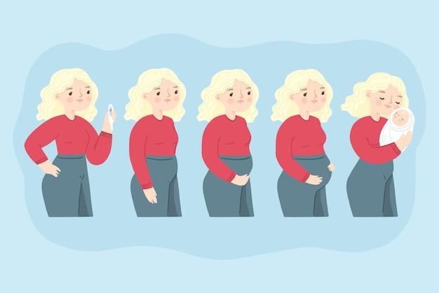 Diferentes etapas del embarazo ilustradas.
