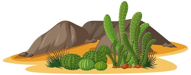Diferentes formas de cactus en un grupo con elementos de rocas.