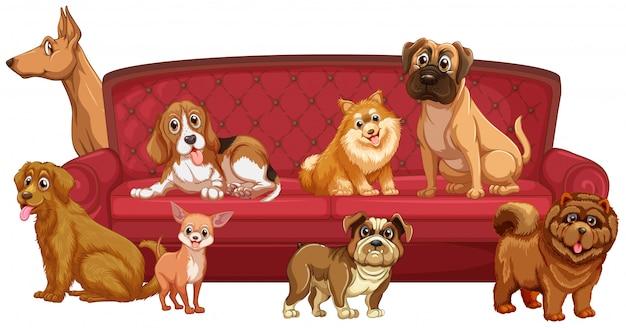 Diferentes razas de perros en el sofá.