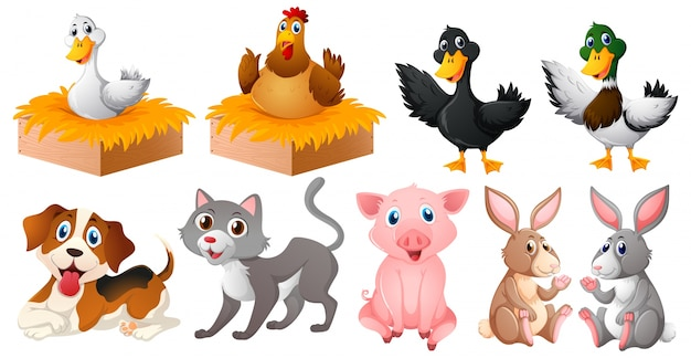 Diferentes tipos de animales de granja