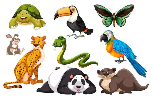 Diferentes tipos de animales salvajes ilustración
