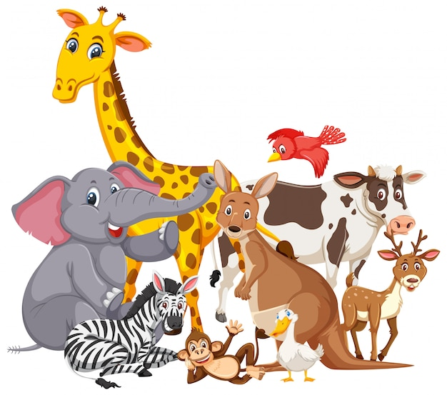 Diferentes tipos de animales salvajes.