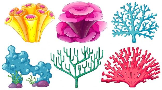 Diferentes tipos de arrecifes de coral.