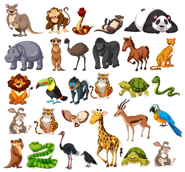 Diferentes tipos de animales salvajes en blanco