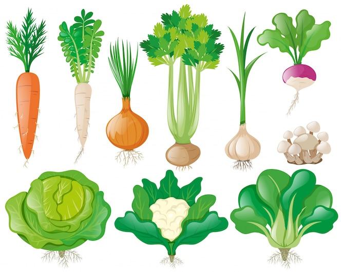 Diferentes tipos de vegetales