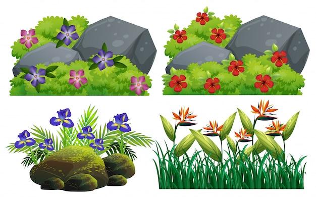 Los diferentes tipos de flores en el arbusto
