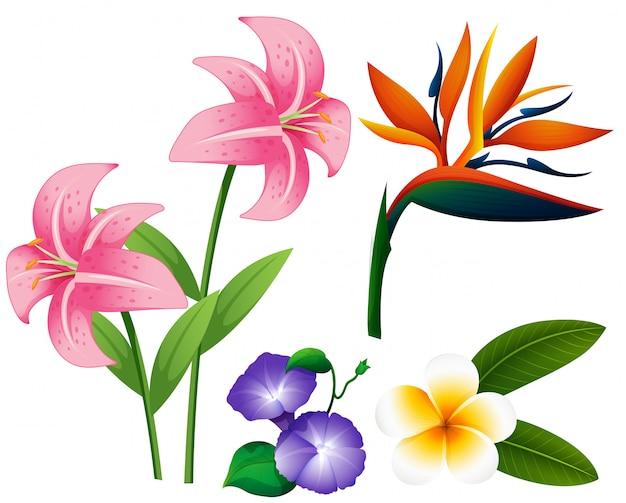 Diferentes tipos de flores