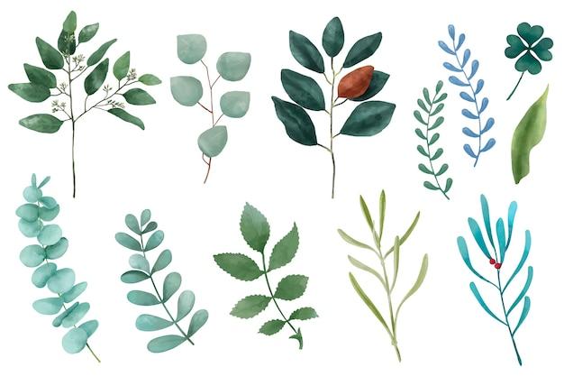 Diferentes tipos de hojas de plantas ilustradas aisladas sobre fondo blanco.