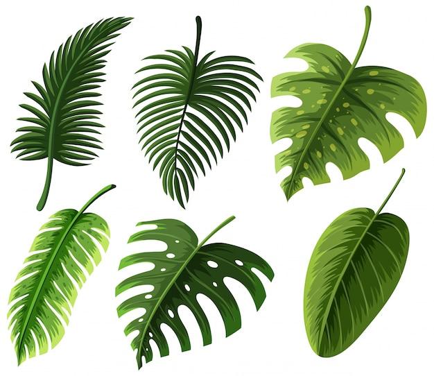 Diferentes tipos de hojas
