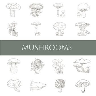 Diferentes tipos de hongos