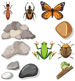 Diferentes tipos de insectos con elementos de la naturaleza.