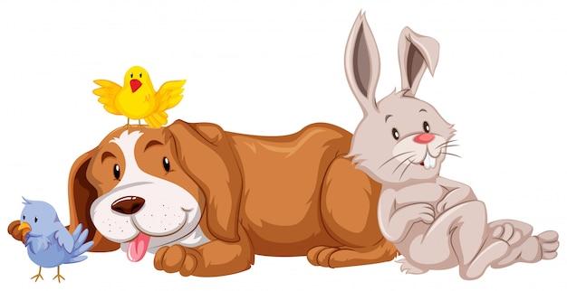 Diferentes tipos de mascotas sobre fondo blanco.
