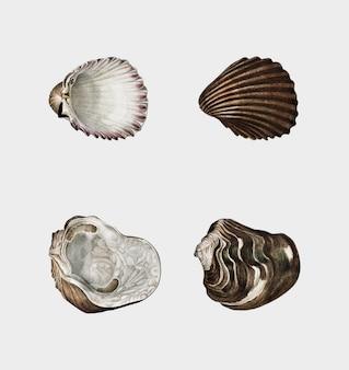 Diferentes tipos de moluscos.