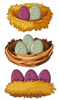 Diferentes tipos de nidos y huevos.