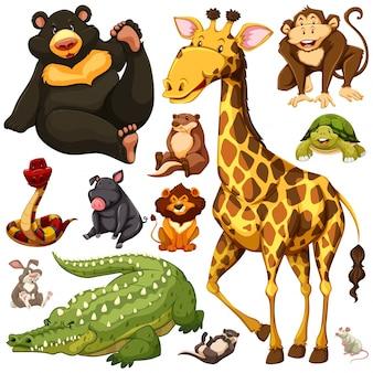 Diferentes, tipos, salvaje, animales, ilustración