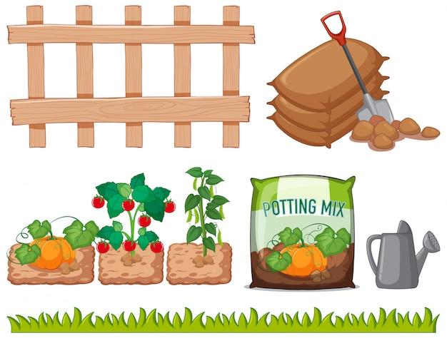Diferentes verduras y herramientas en el jardín.