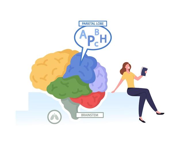 Diminuto personaje femenino con libro en el enorme cerebro humano separado en partes coloridas y lóbulo parietal de trabajo responsable del procesamiento de la información somatosensorial del cuerpo. ilustración vectorial de dibujos animados