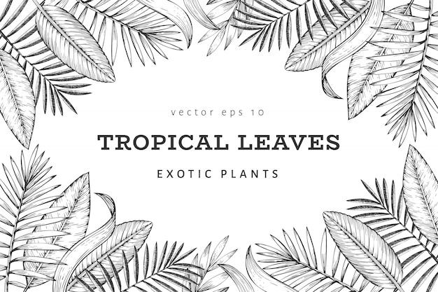 Diseño de banner de plantas tropicales. dibujado a mano ilustración de hojas exóticas de verano tropical. hojas de selva, hojas de palmera grabadas estilo. diseño de fondo vintage