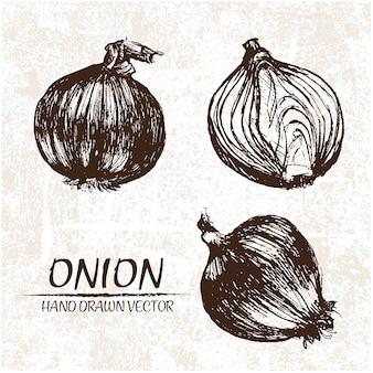 Diseño de cebolla dibujada a mano