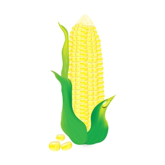 Diseño de ilustración vectorial de mazorca de maíz amarillo