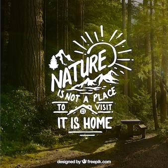Diseño de lettering y cita sobre fondo de bosque