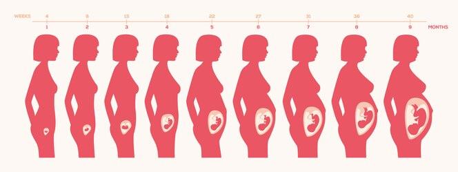 Diseño de proceso de embarazo