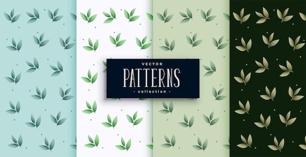 Diseño de escenografía de patrón de hojas verdes ecológicas
