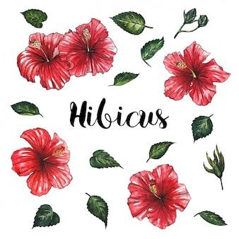 Diseño de flores rojas