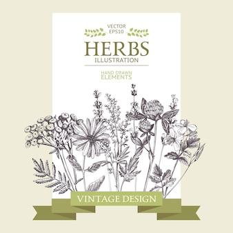 Diseño con hierbas dibujadas a mano. fondo decorativo con dibujo de hierbas medicinales vintage