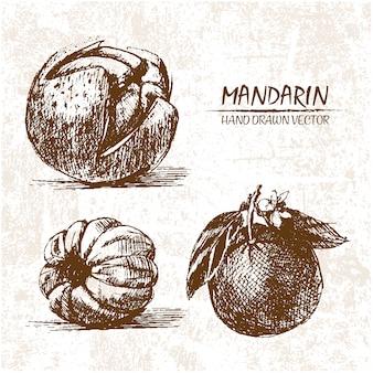 Diseño de mandarina dibujada a mano