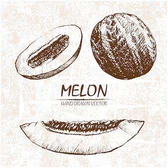 Diseño de melón dibujado a mano