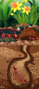 Diseño del paisaje con hormigas rojas bajo tierra