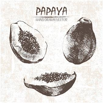 Diseño de papaya dibujada a mano