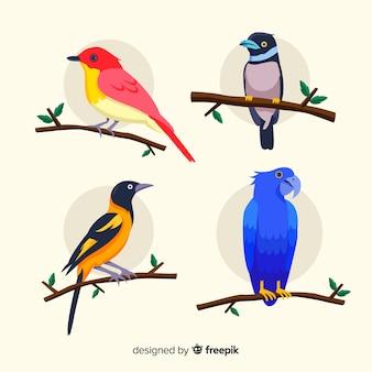 Diseño plano de colección de aves exóticas