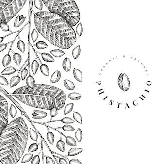 Diseño de rama y granos de phistachio dibujado a mano