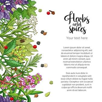 Diseño de tarjeta de hierbas con especias y hierbas