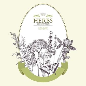 Diseño de tarjeta de verano. plantilla vintage con flores y hierbas dibujadas a mano. guirnalda de plantas y hierbas medicinales en estilo grabado.