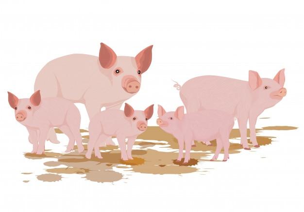 Diseño de vector de cinco cerdos