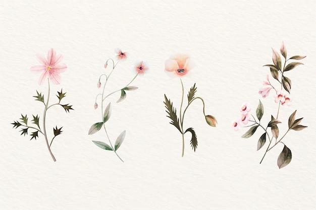 Diseño vintage de la colección de flores de botánica